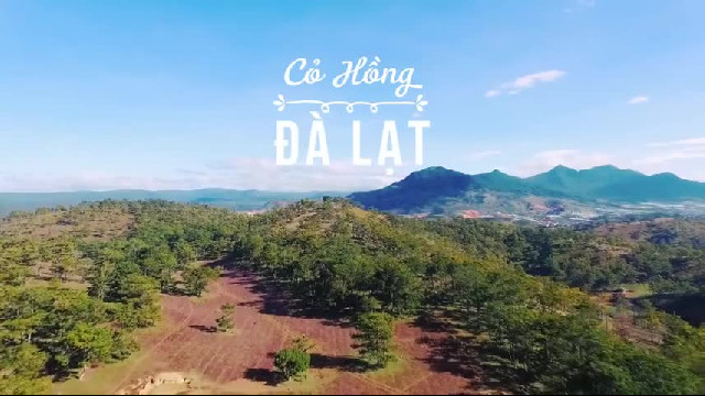 da-lat-l-doi-co-hong-doi-co-tuyet-hong-da-lat
